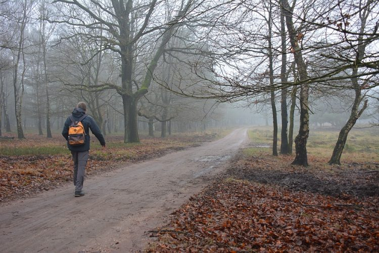bospad in het Deelerwoud