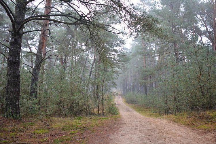 Trage Tocht Deelerwoud boswandeling op de Veluwe