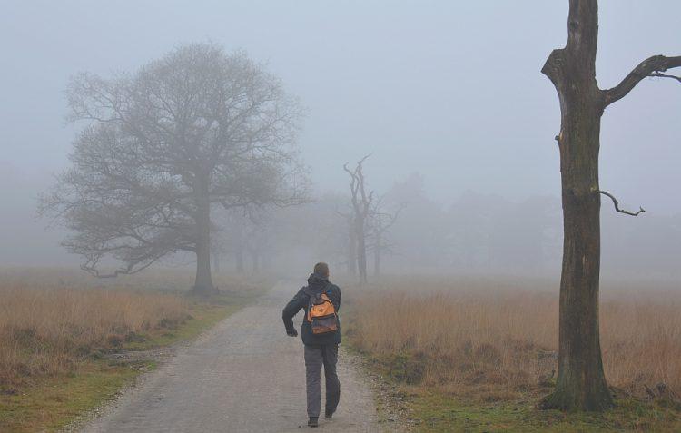 mist in het Deelerwoud