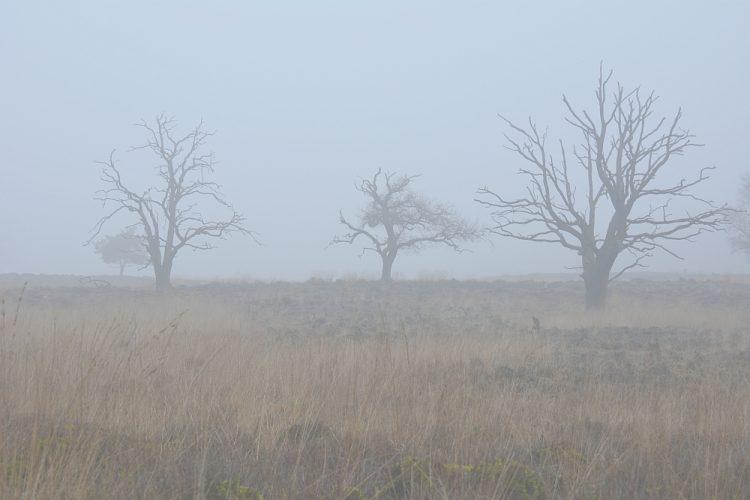 mistige ochtend in natuurgebied Deelerwoud