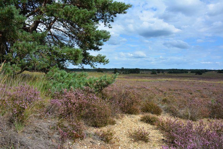 uitgestrekte vlaktes op de Veluwe