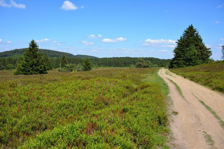wandelen bij Winterberg de Niedersfelder Hochheide