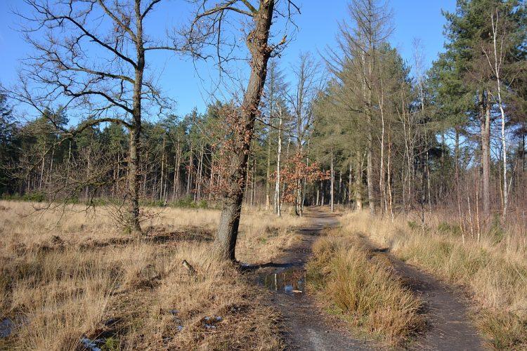 wandelen in de Stiphoutse bossen