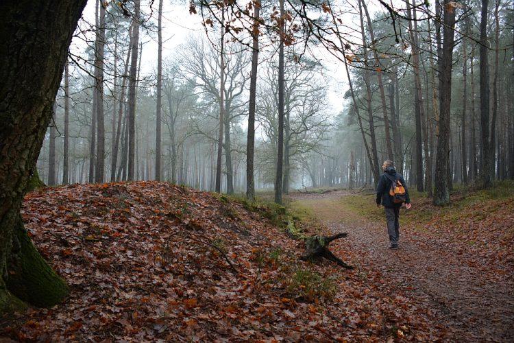 wandelen in het Deelerwoud