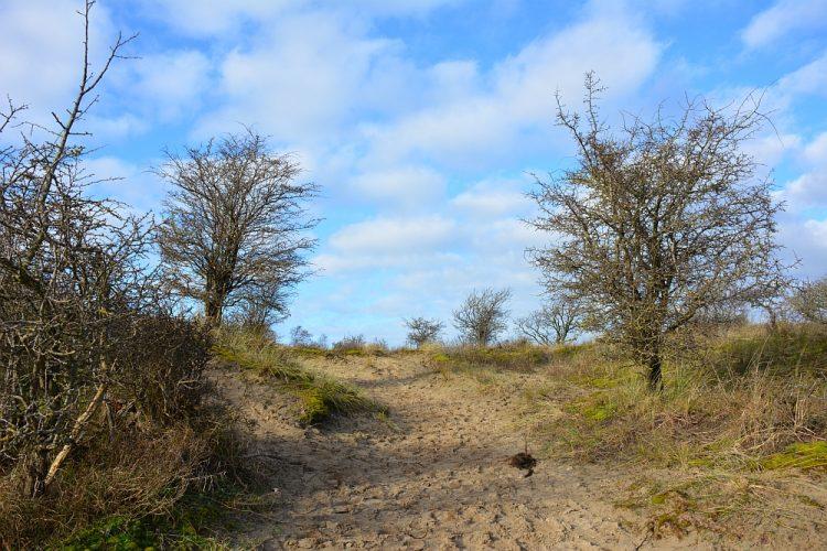 wandelen in het Nationaal Park Zuid-Kennemerland