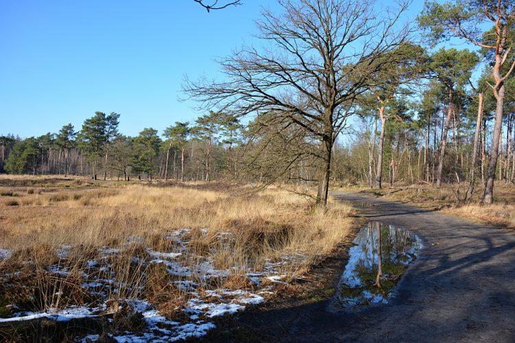 wandelen rond Helmond vennen in de Stiphoutse bossen