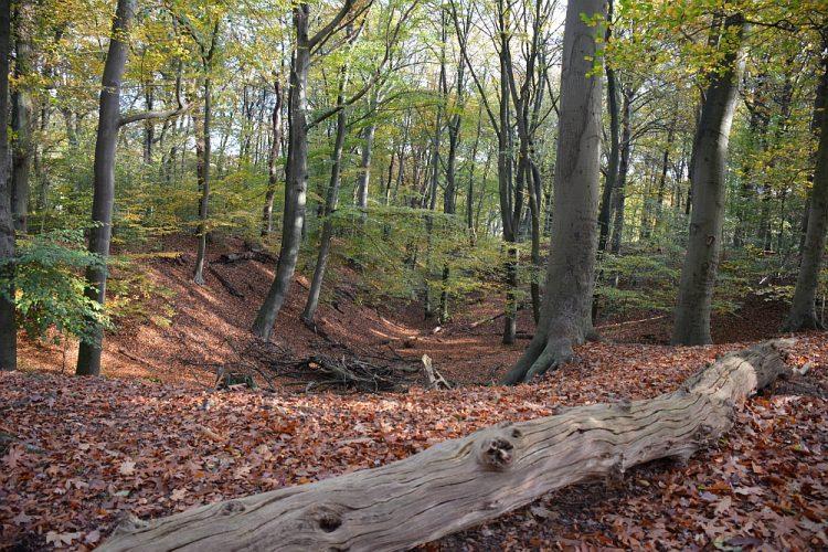 bos op de Grebbeberg Rheden