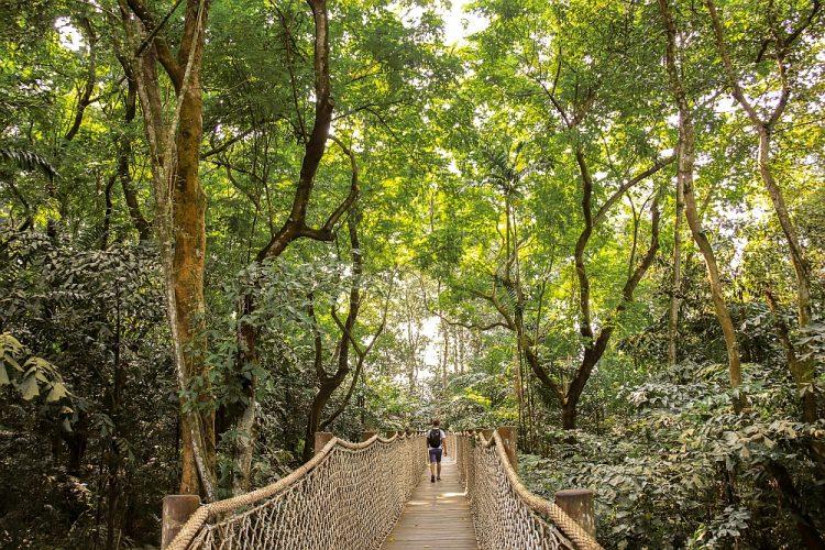 botanische tuinen Singapore