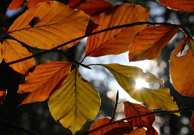 herfstkleuren op de Utrechtse Heuvelrug