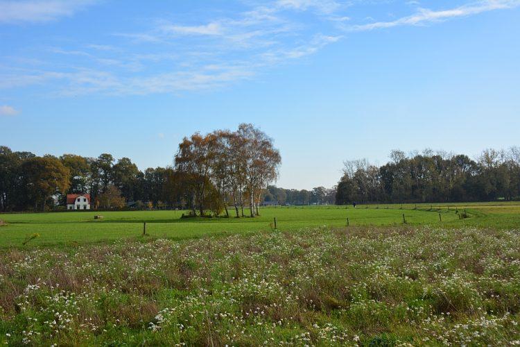 natuurgebied de Laarsenberg Rhenen