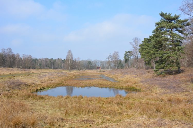 De Leemputten boswachterij Dorst