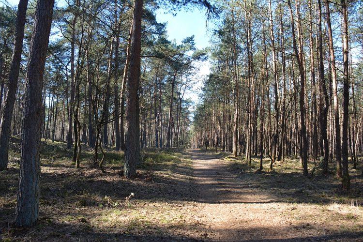 bos in de Planken Wambuis bij Otterlo