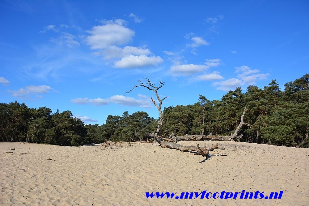 foto van de maand Myfootprints Mosselse zand Otterlo