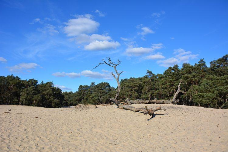 het Mosselse Zand stuifzandgebied