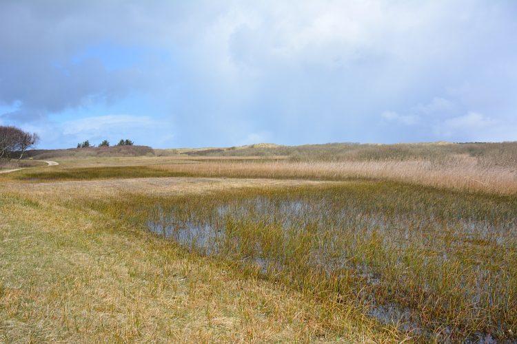 natuurgebied het Zwanenwater Callantsoog