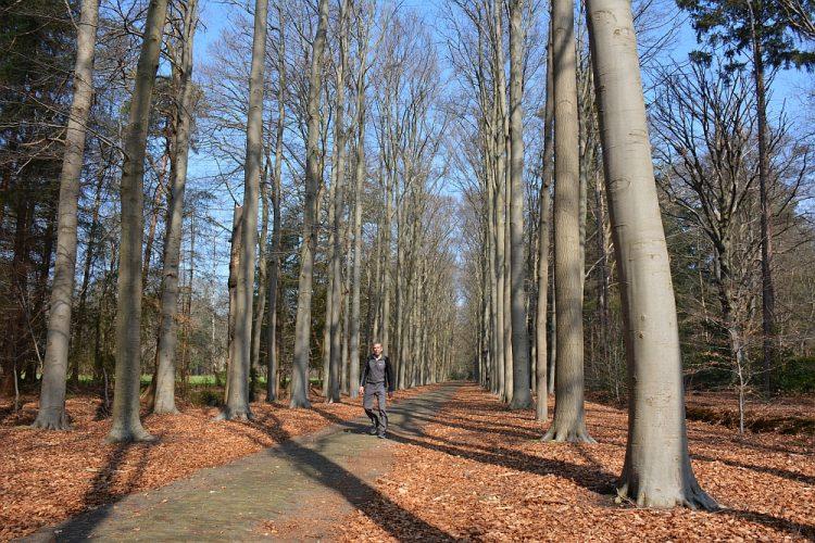 oprijlaan Meeldreef landgoed Valkenberg