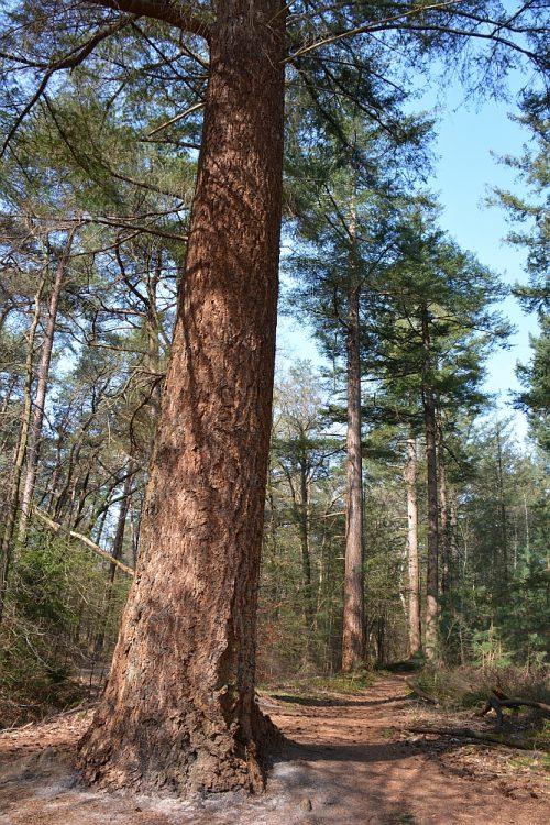 oude bomen op landgoed Valkenberg Gilze Brabant