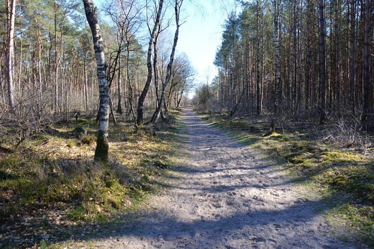 wandelen in het Roekelse bos de Veluwe