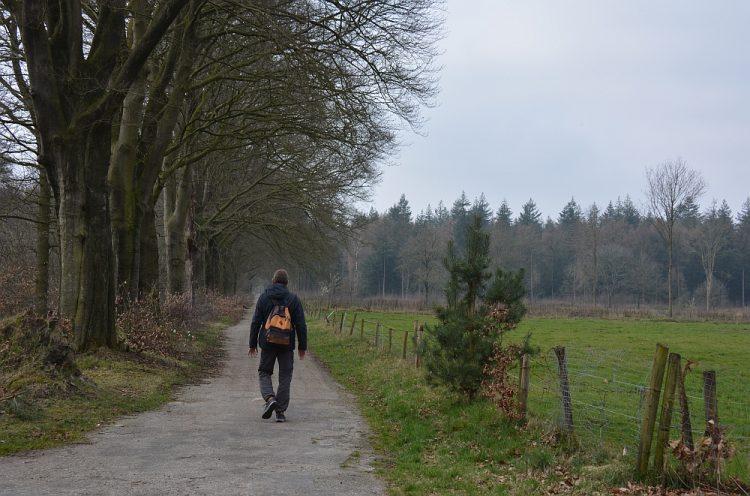 wandelen rond Rijen boswachterij Dorst