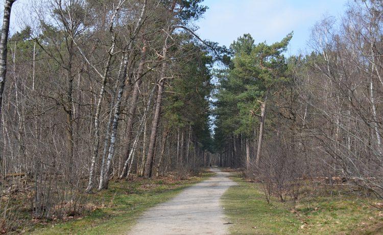 wandeling boswachterij Dorst