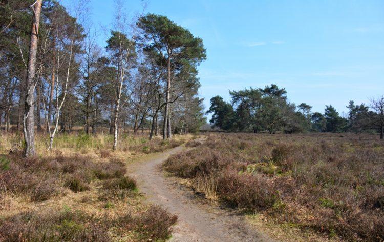 wandelroute Strijbeekse heide Brabant