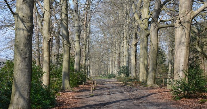 wandelroute landgoed Hondsdonk Chaam