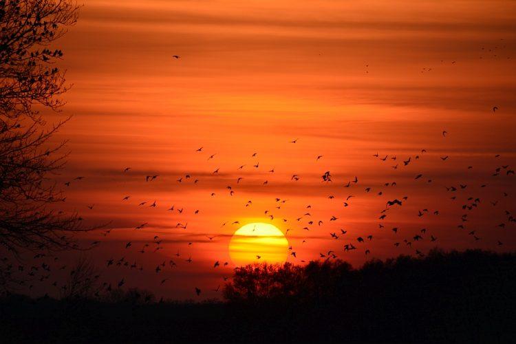 zonsondergang in het Fochteloërveen Friesland