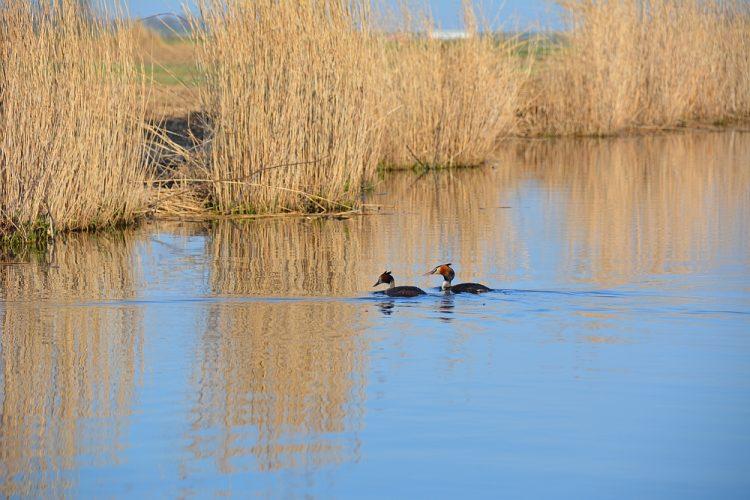 futen in natuurgebied Waterland
