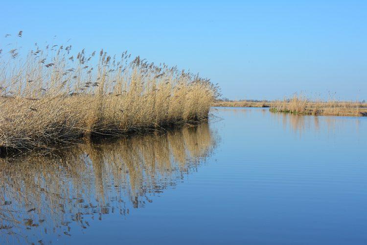 natuurgebied waterland