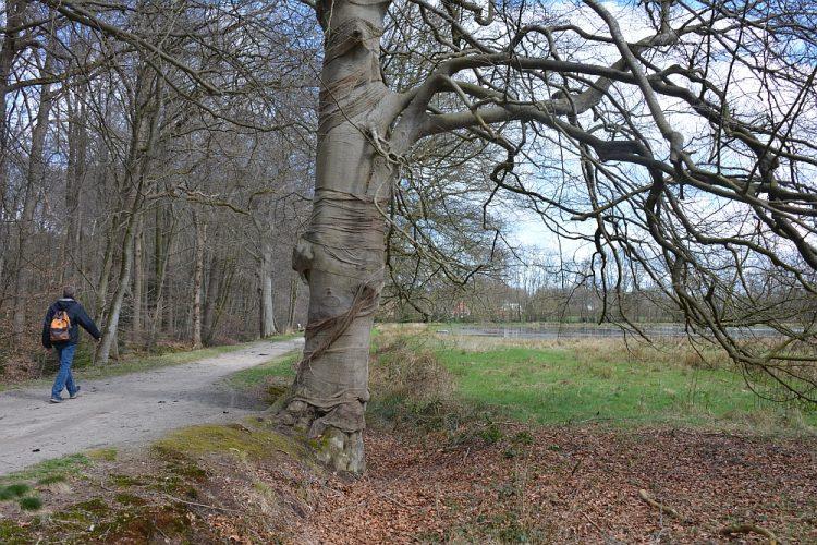 wandelen landgoed de Slotplaats Bakkeveen