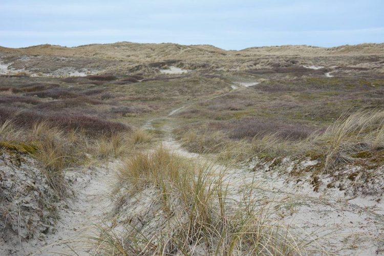 duinwandeling Texel