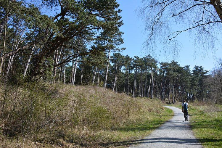 fietspad door bos op Schiermonnikoog