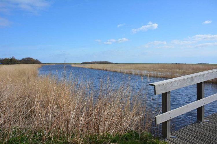 kreekje in Natuurreservaat Roggesloot Texel