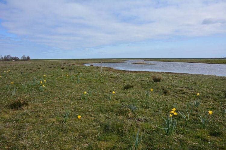 natte natuur en akkers in Natuurreservaat Roggesloot