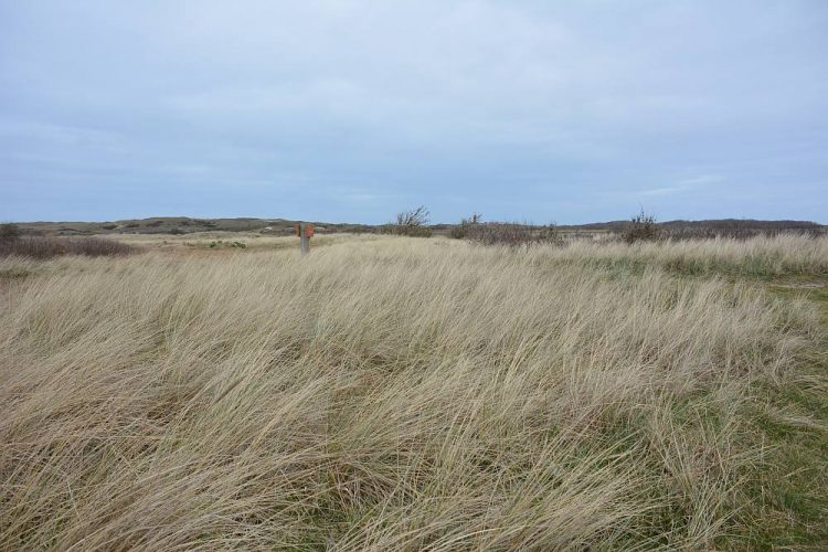 wandelen Nationaal Park Duinen van Texel