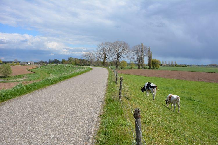 wandelen over de dijk bij Rijnstrangen