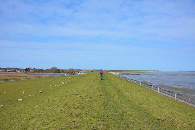 wandelroute Texel over de dijk