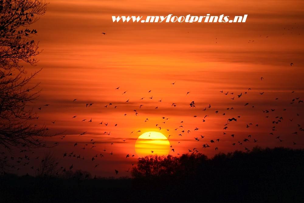 zonsondergang Fochteloërveen Friesland