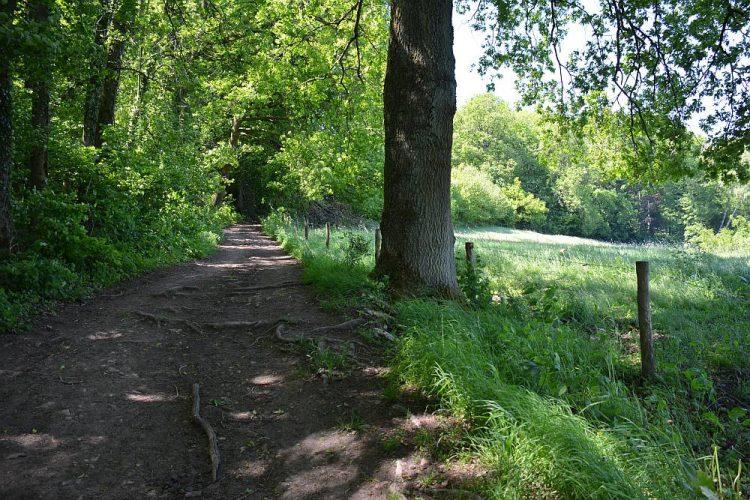 Dutch Mountain Trail bij Vijlen