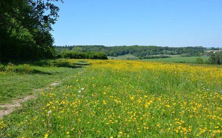 bloeiend veld tussen Vaals en Vijlen