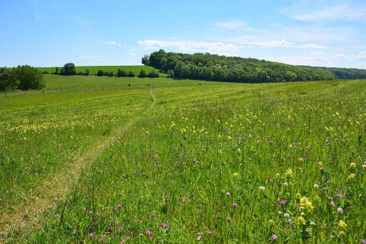 bloemrijke velden op de Gulperberg