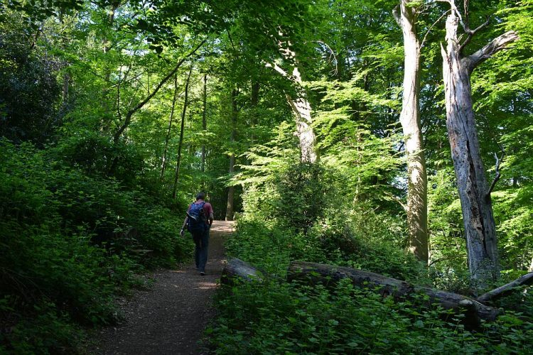 bos op de Dutch Mountain Trail