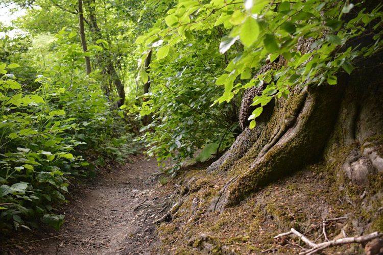 bos op de Hakkenberg België