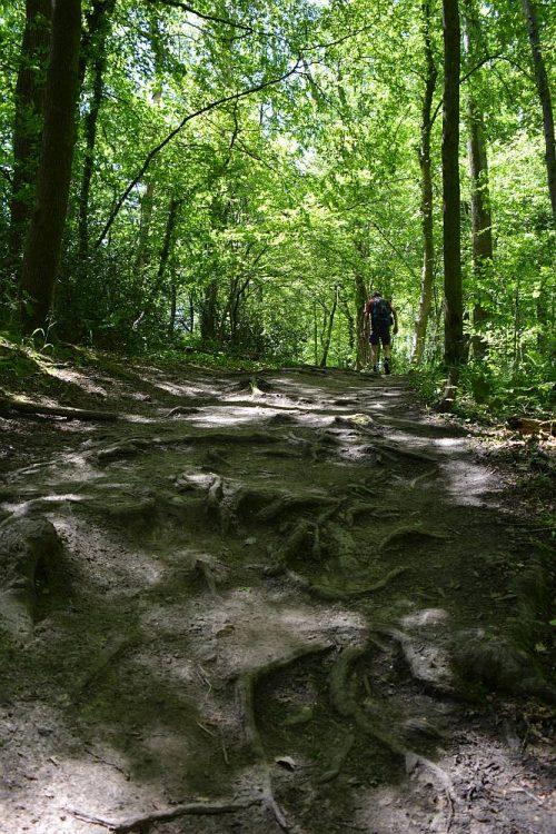 bospad in de buurt van Drielandenpunt Vaals