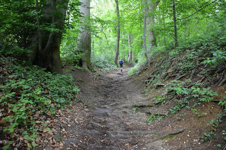 bospad op Dutch Mountain Trail etappe 4