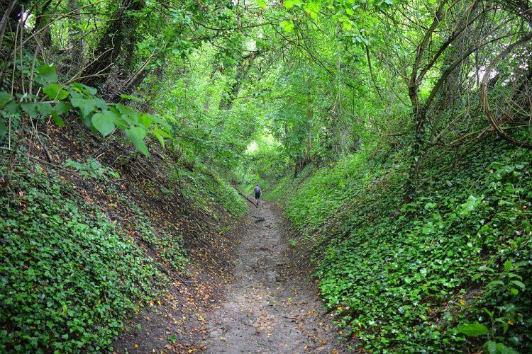 holle wegen op de Dutch Mountain Trail