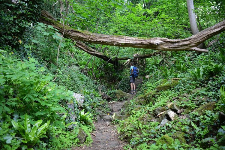 jungle op de Dutch Mountain Trail