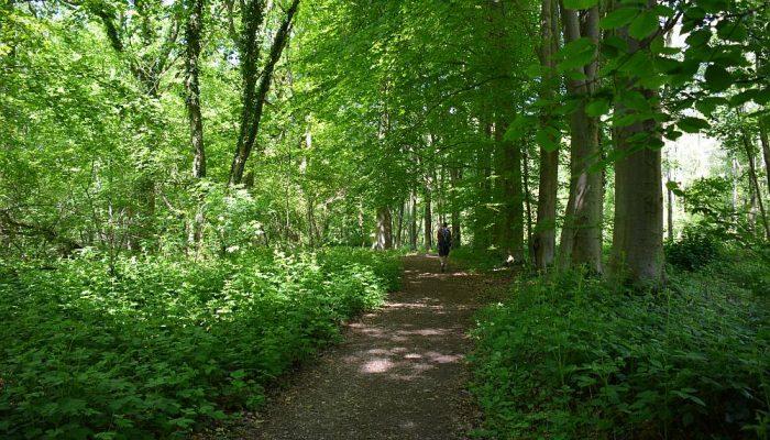 wandelen door het Eysderbos