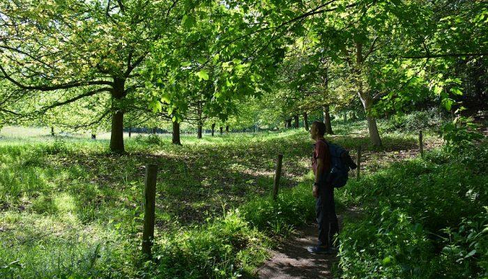 wandelen in het dal van de Strijthagerbeek