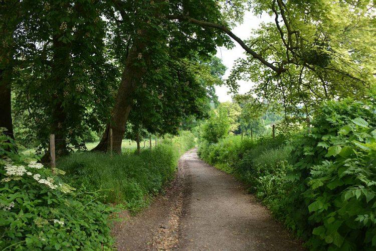 wandelen op de Kattenroth België